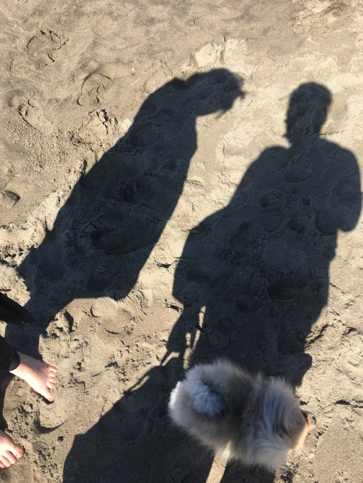 An image of two shadows and a dog